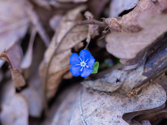 little purple High Angle View Day Botany Petal Spring Flowers Springtime Spring EyeEm Nature Lover Growth Blue Outdoors Close-up Nature Flower Head Purple Leaf No People Inflorescence Selective Focus Fragility Vulnerability  Beauty In Nature Flower Plant Vulnerability  Flowering Plant Freshness Plant Part