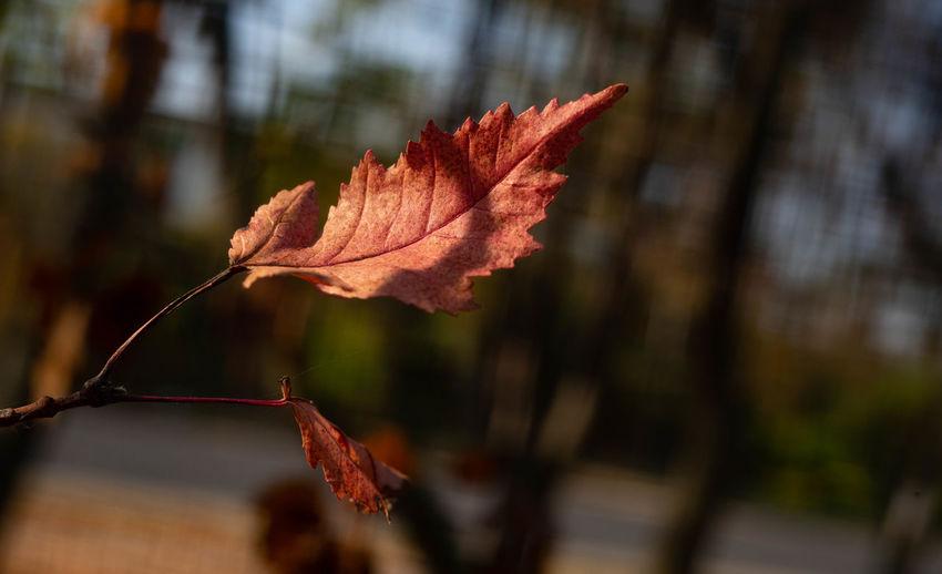 Leaf Focus On