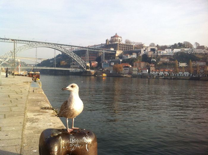 EyeEm Porto Douro  Oporto Water Reflections