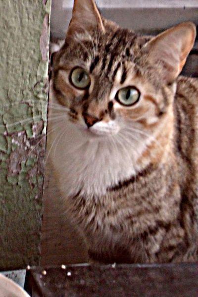 Cat♡ Cats Catworld Kitty Kittens
