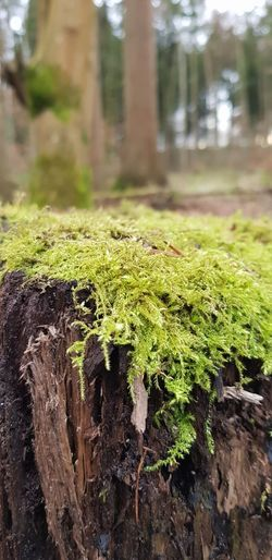 nature Forest Calmness Breath Deep Breath Wood Walk Free Time Leisure Activity First Of January Park Deer Macro Photography Large Group Of Objects Happiness EyeEm Best Shots The Week On EyeEm Winter Hiking Adventure Sporty Going For A Walk Variation Day Water Focus On Foreground Tree Trunk Grass Freshness Beauty In Nature Tree