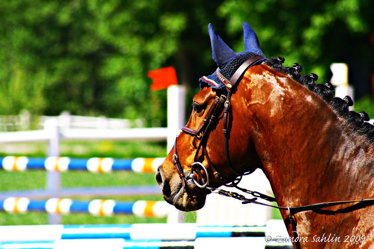 Enjoy life instead of trying to race with others, you only live once Race For Life Showjumper Horse With Colors