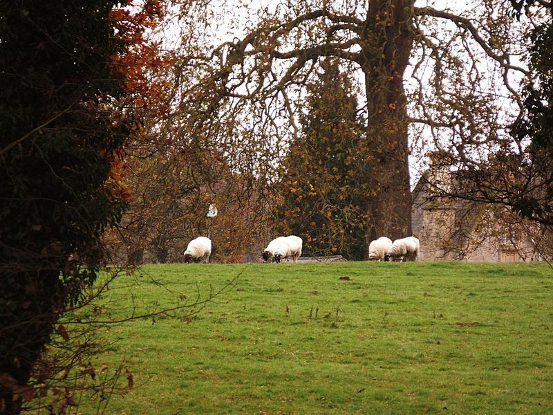 Photography Landscape Tree Grass Green Color Mammal Animal Themes Sheep Grazing No People Scenics Architecture Built Structure