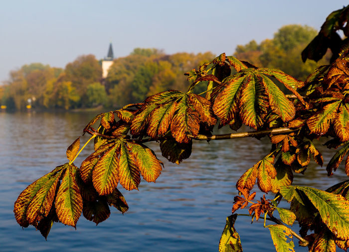 Close-up of autumn leaves in lake against sky