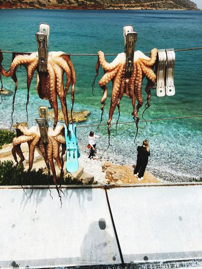 Octopus Hanging Against Sea