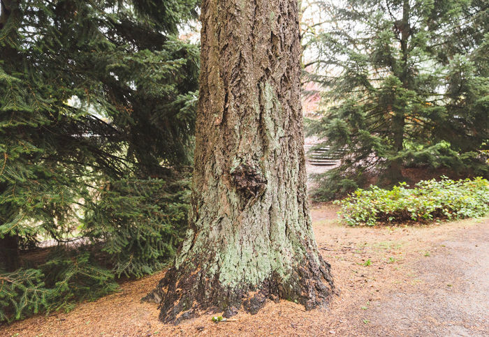 Hoyt Arboretum / Forest Park in Portland, Oregon, USA. Fall time foggy and rainy day. Beauty In Nature Day Forest Growth Landscape Nature No People Outdoors Scenics Sky Tranquil Scene Tranquility Tree Tree Trunk