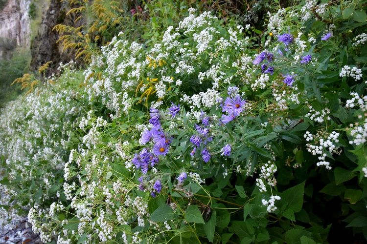 Wildflowers In Bloom Autumn Flowers Beauty In Nature Close-up Flower Freshness No People Purple Wildflowers