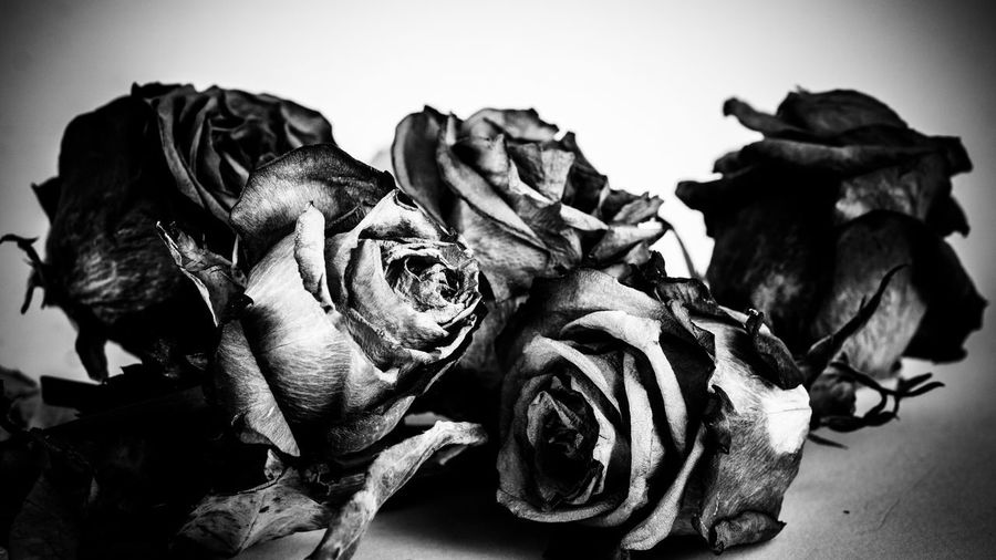 Withered Rose Lightroom Canon EF 70-200 F4 Sony A6000 Light And Shadow Blackandwhite Monochrome Withered Rose No People Close-up Home Interior Indoors