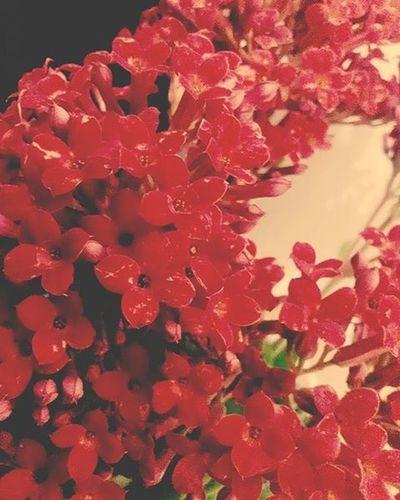 ……………………………………………………………………………………………………… بچه که بودم از عکس گل بدم میومد... از گلدون گل هم همینطور... یادمه یه بار برخلاف میل قلبیم از مادربزرگم خواستم برام گلدون بخره...خیلی زود هم خشک شد:-) همیشه وقتی تو خصوصیات ماه تولدم میخوندم نوشته بود اردیبهشتی هاعلاقه مند به گل و گیاه…میگفتم دروغه:-) چند وقتیه هر صبح که از خواب بیدار میشم تا به گلم آب ندم و نوازشش نکنم روزمو شروع نمیکنم... میگفت آب دادن به گل شبیه بوسیدن لب یاره؛گل_پاییزی_من :-) شازده کوچولو هم یه گل داشت... چیزی شبیه شیشه ی عمر آدمه... چیزایی مثل گلدونش، کتابش، قلمش، دوربینش، عروسک جغدش یا هر چیز دیگه ای که اگر نباشه ... نمیشه ... باید باشه ... باااید باشه:-) حالا من گلم رو که میبینم بهش لبخند میزنم حس خوبی بهش دارم سادیسم وار دوست دارم در آغوشش بکشم یا مثلا بوسه بزنم روی برگ برگ گلبرگ هاش . . . . (شیشه ی عمر شما چیه؟؟؟؟^_^) ۱۵/۱۲/۹۴ ۲۱:۰۰ شنبه شب گل_پاییزی_من کادو وسط خیابون لواشک سپندار_مذگان ذوق_زده هانیه_سامعی ………………………………………………………………………………………………………