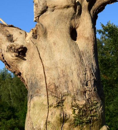 Close-up Day Face Fantasy Growth Nature No People Non-urban Scene Outdoors Overgrown Remote Scenics Sky Solitude Sunny Tranquil Scene Tranquility Tree Tree Trunk Weathered Wood Wood Material