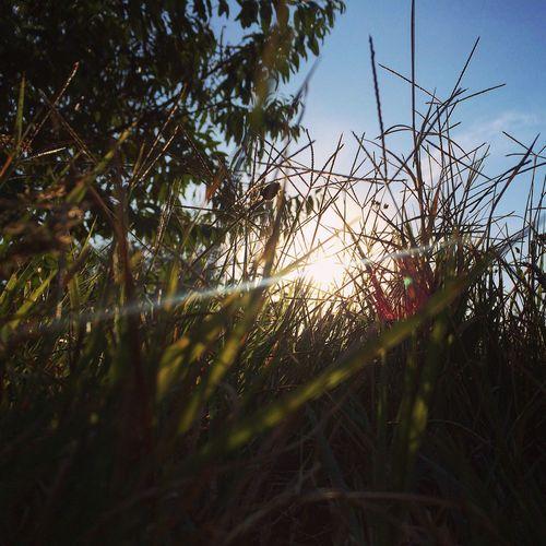 Collected Community Nature Vilkovo OpenEdit Grass Sun