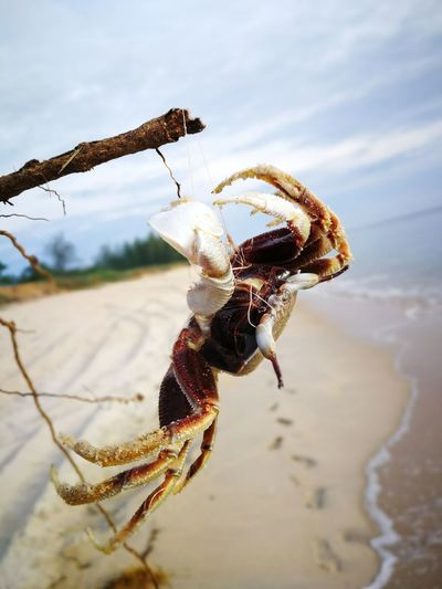 Poor little crab strangled in strings One Animal Animal Wildlife Animals In The Wild No People Beach Day Nature Outdoors Sea Life Sky Crab Pollution Strangled South China Sea Kuala Terengganu Malaysia EyeEmNewHere