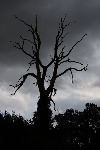 Dead tree silhouetted against a dark sky. Taken at Little Welnetham, Suffolk, UK Dark Sky Dead Tree Dramatic Sky Silhouette Sky And Clouds Beauty In Nature Branch Cloud - Sky Dead Plant Dramatic Dramatic Landscape Drawing Nature Plant Silhouette Sky Sky_collection Tranquility Tree Tree Trunk