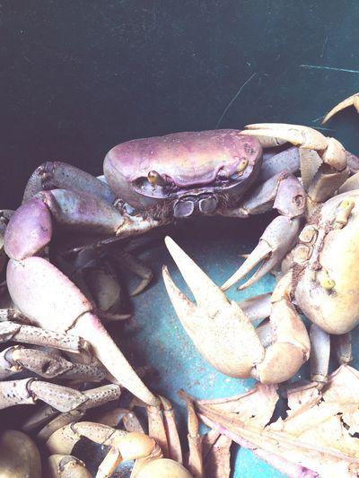 Crabes Martinique