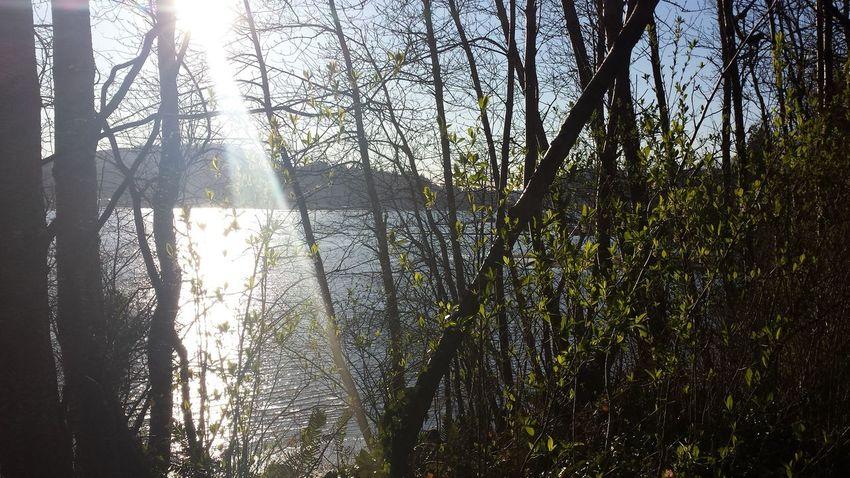 Springtime Eye Em Nature Lover Sun Rays Portmoody