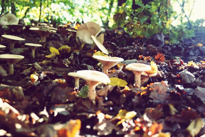 magic of nature Magic Magical Forest Magicofnature LoveNature Fungus Mushroom Nature Outdoors Toadstool Growth No People Autumn Beauty In Nature