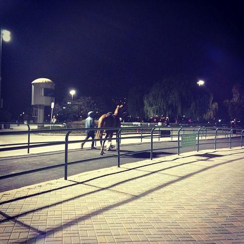 Night time racing