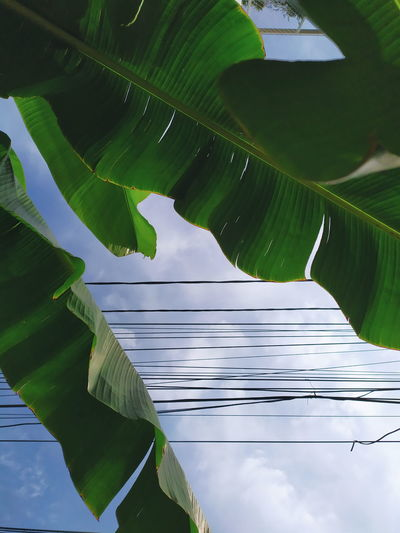 Low angle view of leaf on tree against sky