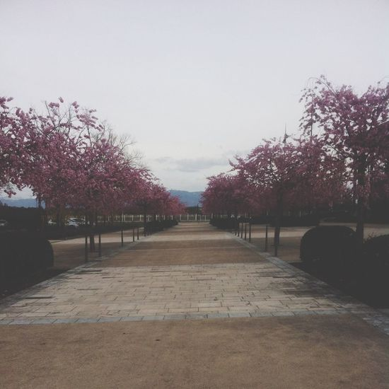 Spring 2013