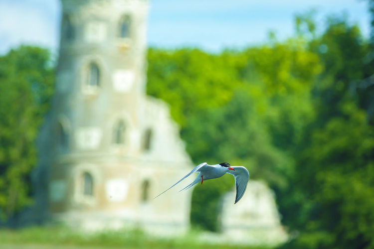Bird flying against the sky