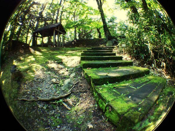 まだまだ緑が多い Nature Forest Park