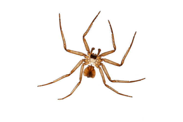 Close-up of spider on white background