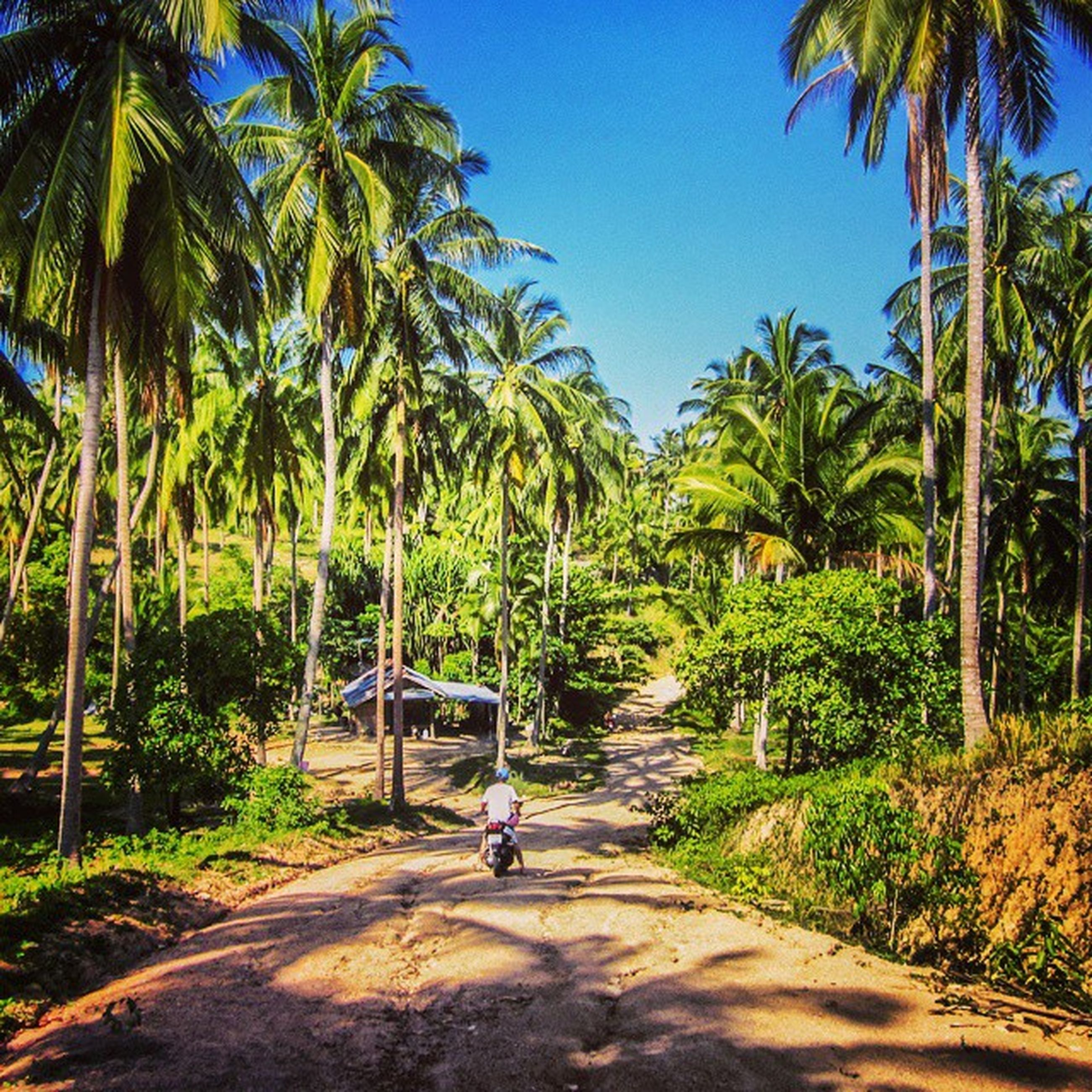 tree, palm tree, leisure activity, lifestyles, growth, men, transportation, green color, full length, nature, tranquility, person, mode of transport, tranquil scene, clear sky, sunlight, travel, beauty in nature