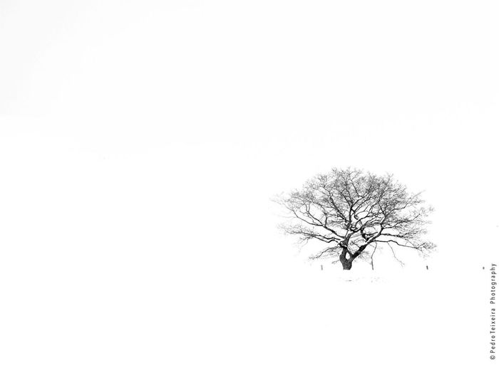 Highkey Luxembourg Discover Luxembourg Blackandwhite Trees