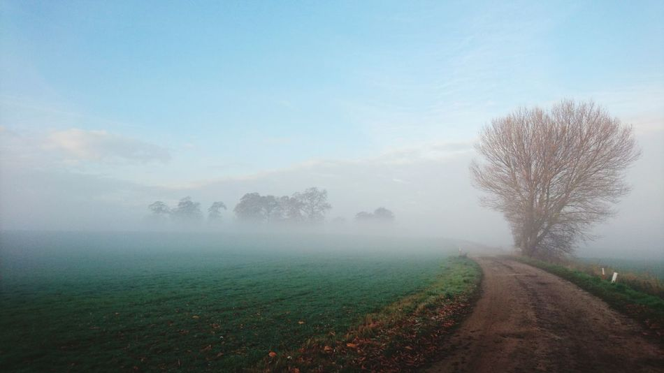 Tree Nature Fog Tranquility Beauty In Nature Rural Scene Landscape Tranquil Scene Agriculture Grass Sky Day Scenics No People Outdoors Growth Premium Collection The Great Outdoors - 2017 EyeEm Awards The Great Outdoors - 2017 EyeEm Awards