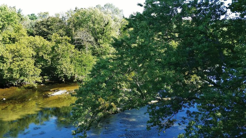 A Bird's Eye View Water Tree Tranquil Scene Growth Reflection Beauty In Nature Nature Calm Non-urban Scene Green Lush Foliage Growing High Angle View Looking Down Picsart_family Conococheague Creek Maryland USA The Premium Collection