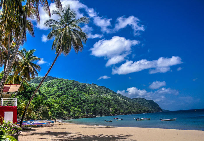Water Blue Sea Palm Tree Tree Beach Scenics Beauty In Nature Vacations Outdoors Landscape Nature Relaxation Tobago,Castara Beach Tranquility Cloud - Sky Sky