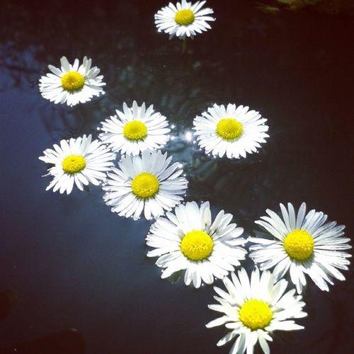 Beautiful Sun Flower Lovely