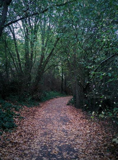 Green Tunnel Trees Path Autumn Morning Walk