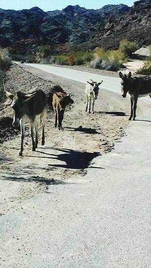 donkeys on the road Donkeyshot Shadow Agriculture Sunlight Sky Livestock