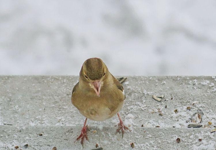 Hungry Birds Snowy Days... EyeEm Bird Lover  Cold Days Eyem Nature Lovers  Birds BirdLovers