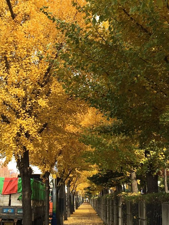 After summer, before winter Road Fall Ansan