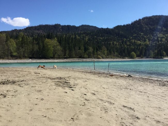 Lake Walchensee Germany Dogs Playing Playing Dogs Beach