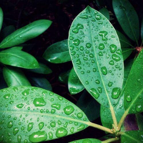Drop Leaf Wet