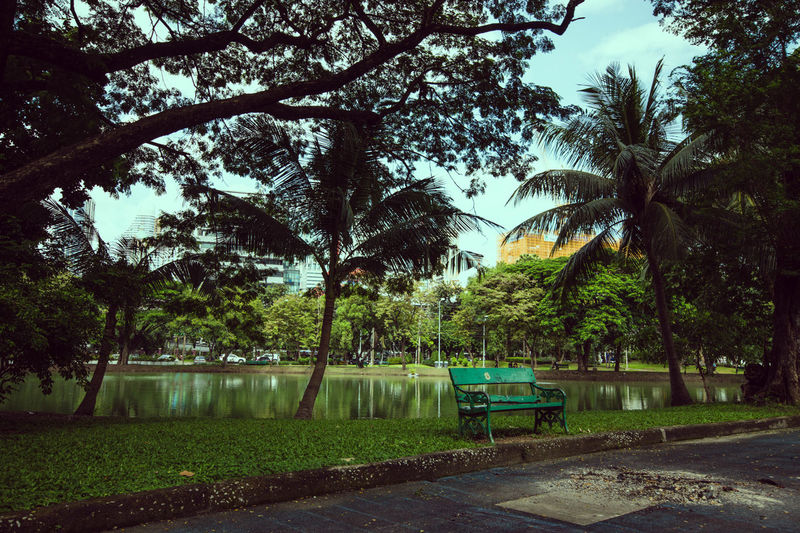 Lumphini Park Bank Beauty In Nature Branch Day Growth Nature No People Outdoors Palm Tree Park Sky Tree Tree Trunk Water