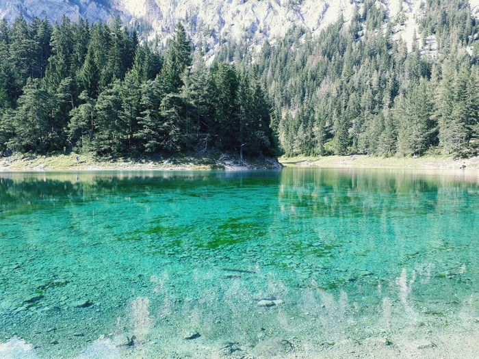 wonderful lake 🏞🌞 Lake Summer Sun Austria Steiermark Grüner See Tragöss Water Nature Day Green Color Beauty In Nature No People Outdoors Tree