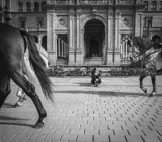 Sevilla Andalucía Ok_spain Ig_laspalmas Ig_canarias_ Ig_canaryislands Ok_canarias Loves_canarias Ok_sevilla Ok_andalucia IG_andalucia Horse Livefolk Art Estaes_sevilla  Loves_sevilla Nikon SPAIN Bw_awards Bnw_europe Ae_bnw Superstarz_bw Flair_bw Pr0ject_bnw Bww_demand BNW_CITY bnwmood bnw_lifehorsesplanet