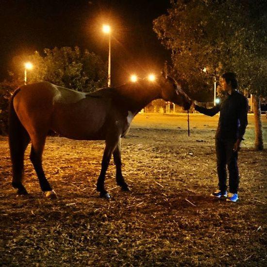Night Lights Horse Buckskin