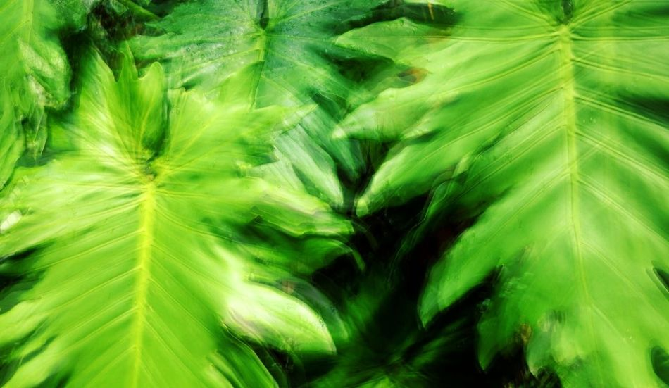 Tropical Plants Green Leaves in a Rainforest Mauritius EyeEm Nature Lover IPhoneography Multiple Exposures Exploring New Ground