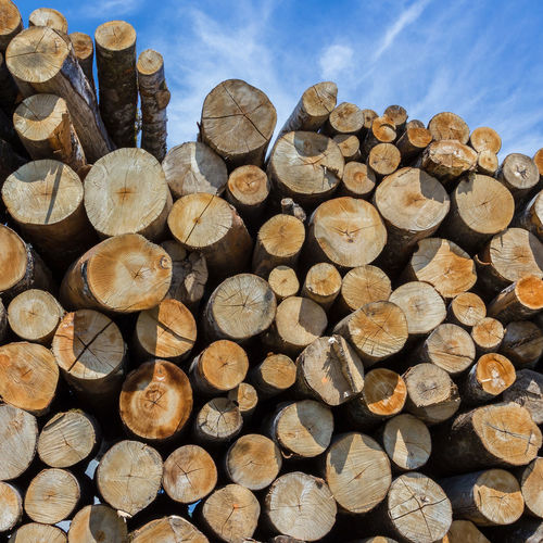 Wood Pile Stacked Tree Forest Stack Background Sky Stock Firewood Up Wooden Timber Cut Heap Pine Nature Trunk Lumber Log Logging Industry Outdoor Material Forestry Blue Environment Ecology Deforestation Logs Bark WoodLand Chopped Energy Winter Closeup Raw Sawed Freshly Rural Resource