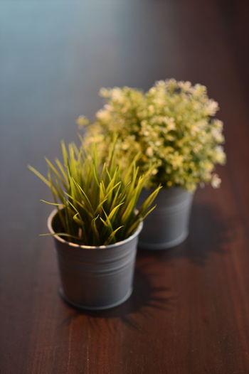Flower Herb