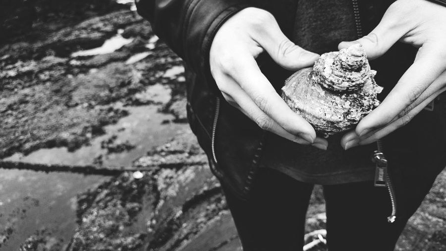 Cropped Image Of Person Holding Conch Shell In Hand