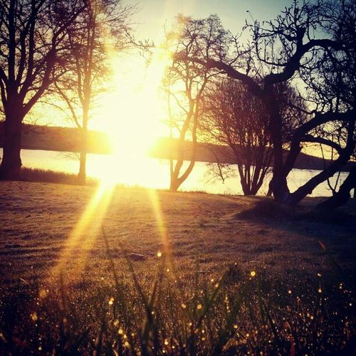 Golden hour. Sunshine Photooftheday Sunrise Zappanature nature
