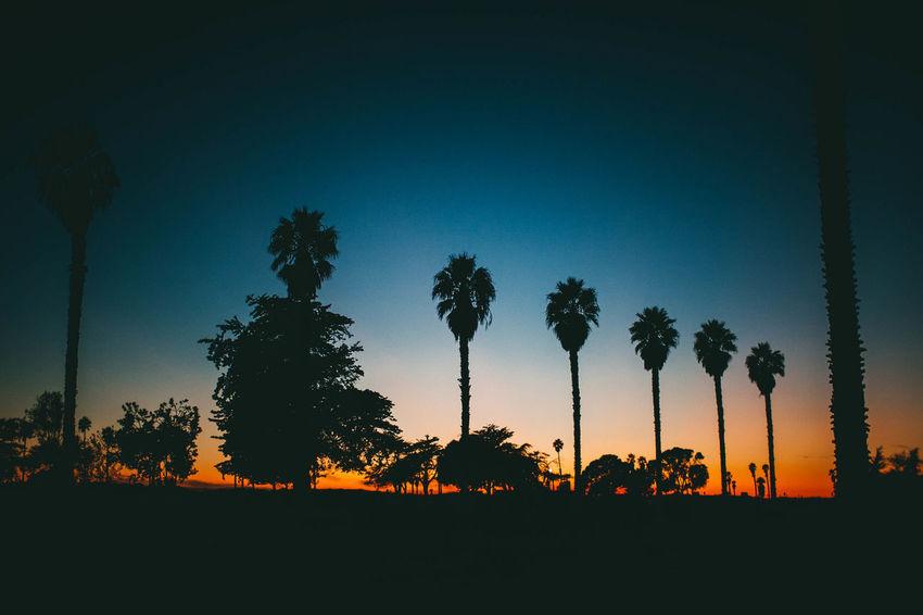 Plum Tree Check This Out Hanging Out Hello World Evanscsmith Photographerinlasvegas Lifestyles Ventura California Cali