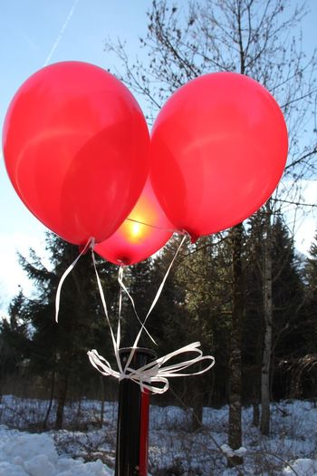 Low angle view of red balloons in snow