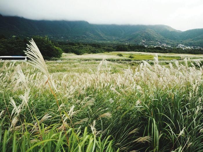 すすき 仙石原 Landscape Beautiful Japan Travel Taking Photos Mountain Beauty In Nature Nature